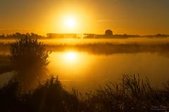 Golden Sunrise Reflection (Johan Konz) Tags: golden light sunrise sun landscape mist tree water grass grassland sky outdoor nikon d7500 purmerend netherlands
