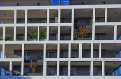 Finestre   #roma #ostiense #finestre (Michele Monteleone) Tags: muro finestra balcone albero cielo edificio architettura geometrico