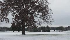 November morning (humbletree) Tags: november morningwalk madison wisconsin