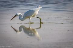 IMG_9203 (muzahidkarim) Tags: bird photo