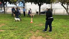 IMG_8520 (Doggy Puppins) Tags: educación canina adiestramiento canino perro dog