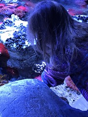 "2018-03-24-to-30-minnesotta-to-see-adam-and-sara-curl-with-family-at-aquarium-4_44036545195_o • <a style=""font-size:0.8em;"" href=""http://www.flickr.com/photos/109120354@N07/45305660725/"" target=""_blank"">View on Flickr</a>"