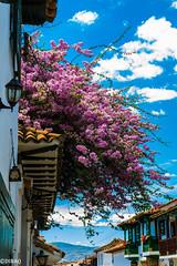 Veranera (dmbarriosq) Tags: sony alpha villa de leyva boyaca colombia colonial ilce7 sonyflickraward flores flowers sky