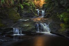 'Golden Syrup' -Vancouver Island (Gavin Hardcastle - Fototripper) Tags: port renfrew vancouverisland winter waterfall forest rainforest west coast long exposure fototripper