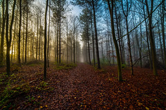 Sunrise in the forest (Paul Wrights Reserved) Tags: colour colourful colours color vibrant atmospheric naturephotography sun sunlight sunny sunsets sunrise forest tree trees autumn landscape landscapes landscapephotography treescape sundaysliders