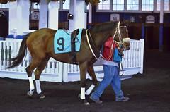 2018-11-30 (40) r9 #9 Variance (JLeeFleenor) Tags: photos photography md marylandhorseracing maryland marylandracing laurelpark horses thoroughbreds equine equestrian cheval cavalo cavallo cavall caballo pferd paard perd hevonen hest hestur cal kon konj beygir capall ceffyl cuddy yarraman faras alogo soos kuda uma pfeerd koin حصان кон 马 häst άλογο סוס घोड़ा 馬 koń лошадь outdoors outside