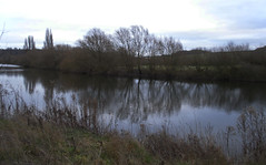 River Trent (amandabhslater) Tags: nottingham attenboroughnaturereserve rivertrent water river reeds tree trees field sky grass sheep