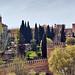 DSC04424.jpeg - Granada
