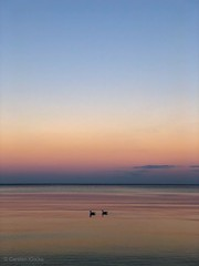 Ostsee Sonnenuntergang (carsten.k.) Tags: licht availablelight goldenhour meer romane romantik timmendorf timmendorferstrand vögel möven 2 sunset sonnenuntergang sand strand ostsee