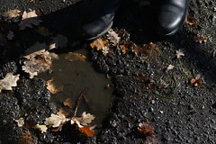 These Boots are made for Walking (Binacat) Tags: canon eos 750d digital color münster autumn leaves brown puddle nature outside sunny boots natur drausen sonnig herbst blätter braun pfütze stiefel november