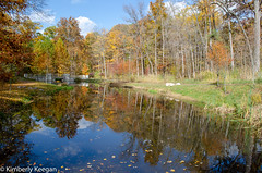 HillsDales2018_DSC_0005 (KKfromBB) Tags: kkfrombb nikon nikond5100 hilldales metropark five rivers metroparks autumn fall 2018 outdoor nature color tree leaf dogwoodpond