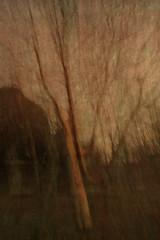 Tree Bark Palette (Ger208k) Tags: ireland dublin stannespark tree bark photomerge icm intentionalcameramovement multipleexposure landscape blur gerardmcgrath