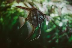 (Peteyu) Tags: fish warsaw water autumn animal animals aqua aquarium canon nature natural landscape dark light leaf leafs plant plants 50mm