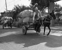Load - Samyang 21mm 1.4 (thomas.pirolt) Tags: india goverdhan radhakund streetphotography street streetlife sony a6000 sonya6000 samyang people portrait candid moment theindiatree life bw blackandwhite black white monochrome
