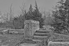 Lakeshore Lodge (gabi-h) Tags: lakehorelodge steps stairs ruins gabih sandbankspark trees solitary cement lonely winter coldday ontario january grass nosnow windswept
