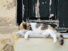 A little light grooming (pefkosmad) Tags: rhodes rodos rhodesoldtown rhodestown backstreets holiday vacation vacances exploring cats feralcats greece greekislands griechenland dodecanese town tortoiseshell