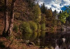 Nonnenmattweiher (Toledo 22) Tags: landschaft natur gewässer blätter herbst autumn forest badenwürttemberg ufer teich bäume nikon schwarzwald blackforest weiher see wald
