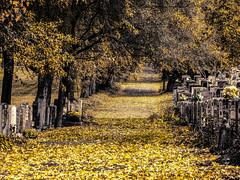 l'allée des disparus (photosgabrielle) Tags: photosgabrielle automne fall cimetièrecdn urban montreal feuilles leaves o be