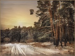winter road in the forest. (odinvadim) Tags: iphoneart landscape iphoneonly winter iphonex iphoneography specialist mytravelgram painterlymobileart iphone snapseed evening travel artist sunset frost textured forest editmaster icolorama