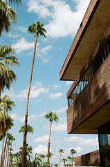 Palm Springs (Travis Estell) Tags: california palmspringsonfilm riversidecounty californiaonfilm thedarkroomlab palmtree kodakportra160 canonae1 palmsprings unitedstates