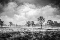 Vapori mattutini (Vanda Guazzora) Tags: biancoenero colline natura nebbia paesaggio alberi atmosfera terra