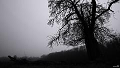 L'hiver (Un jour en France) Tags: hiver monochrome arbrepaysagebrume nature contrejour noiretblanc noiretblancfrance canonef1635mmf28liiusm canoneos6dmarkii