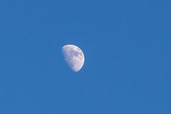 White On Blue (Geraldine Curtis) Tags: cotswolds rural scene kite bird birdofprey gloucestershire upperslaughter moon