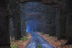 colours of the autumn (JoannaRB2009) Tags: bełdów łódzkie lodzkie polska poland path road oak oaks nature evening fog mist dark tree trees alley avenue forest woods