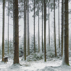 First Snow (M a r i k o) Tags: iphone iphonex iphoneography iphonephotography mobile mobilephotography mariko square forest woods trees wald snow cold schnee white winter hörlkofen wörth erding bayern bavaria germany snapseed