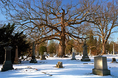 "Cincinnati - Spring Grove Cemetery & Arboretum ""Winter Reflection On Giant Oak Tree"" (David Paul Ohmer) Tags: cincinnati ohio spring grove cemetery arboretum oak tree branches winter headstones"
