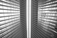 New York (Leire Ro Fotografía) Tags: new york nueva eeuu estados unidos united states city ciudad street calle oculus zona wallstreet calatrava world trade center byn bnw blanco negro black white
