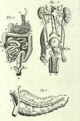 This image is taken from Anatomical dialogues, or, A breviary of anatomy :, c.1 (Medical Heritage Library, Inc.) Tags: hunter william 17181783 anatomy military medicine dulhom dukelibraries medicalheritagelibrary americana date1778 idanatomicaldialog01gent