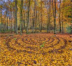 Herbstwald Kreise LanArt (Hanspeter Ryser) Tags: herbst kreise laub buchenlaub buchen holz landart kunst art bäume natur landschaft hanspeter ryser