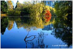 Chilly Morning in Minoru Park - Minoru XT6095e (Harris Hui (in search of light)) Tags: harrishui fujixt1 digitalmirrorlesscamera fuji fujifilm vancouver richmond bc canada vancouverdslrshooter mirrorless fujixambassador xt1 fujixcamera fujixseries fujix fujixf23mmf14 fujiprimelens fixedlens reflection pond lake minoru minorupark walk