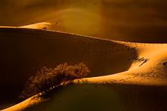 Sand, Footprints and Flare (gpa.1001) Tags: california deathvalley mesquitedunes sunrise