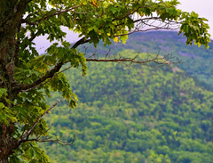 Maine Tree with a Mountain View (RockN) Tags: mountains tree august2016 islandfalls maine newengland