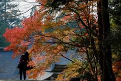morning rays (ababhastopographer) Tags: kyoto takao jingoji morning ray sunlight momiji kaede acerpalmatum 京都 高雄 神護寺 朝 秋 autumn reflection