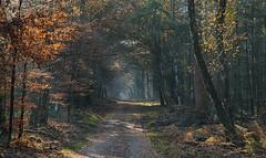 Path (Guido de Kleijn) Tags: speulderbos forest bos autumn colors guidodekleijn veluwe geulders gelderland nikond500 nikon1680f28