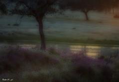 Última luz del día (pedroramfra91) Tags: exteriores outdoors naturaleza nature arboles trees paisaje landscape otoño autumn luz light agua water