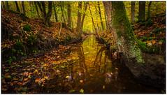 Leuvenumse bos (Rob Schop) Tags: leuvenumsebos le autumn color veluwe sonya6000 wideangle jackboots samyang12mmf20 f11 pola hoyafilters nederland forest tree