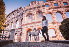 Lady And Dogs In Front Colosseum