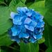Kanazawa Blue