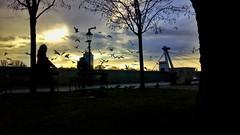 IMG_20181225_141106-01 (Incredibles44) Tags: uforesto birds bratislava slovakia europe travel photography mobilephotography
