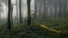 Dark Mist (jorgeverdasca) Tags: darknature goth dji morningfog fog mist sintra drone portugal mavicpro