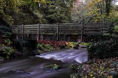 Le pont (fredericpecheux) Tags: pont bridge riviere eau water foret bretagne