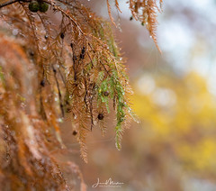 Into Life a Little Rain Must Fall (Wits End Photography) Tags: view landscape season damp outdoor rural weather picturesque drizzle country haziness colors fog rain places gray autumn natural foliage nature mist fall haze trees plant macro tree scenic grey color foggy leaves siue