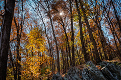 Sun Bursting Through the Fall Leaves (John Brighenti) Tags: outdoors nature outside natural autumn fall sunny afternoon sky blue trees leaves rocks croydoncreek park rockville maryland md recreation hiking walking photography sony alpha a7rii sel28f20 ilce7rm2 sunstar sunburst sun rays
