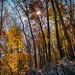 Sun Bursting Through the Fall Leaves