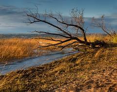 St. Bernard beach (marianna_armata) Tags: p2850595 autumn fall beach grasses tree water river st bernard chateguay quebec canada mariannaarmata
