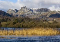Langdale Pikes (l4ts) Tags: landscape cumbria lakedistrict greatlangdale elterwater langdalepikes pikeostickle paveyark snow winter reeds harrisonstickle
